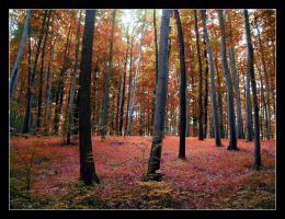 Hungarian fall in the forest by djsatory