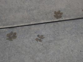 Footprints on the.. Concrete? by BadReception