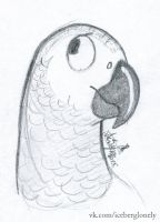 African Grey Parrot by IcebergLonely