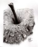 Pencil sketch of an apple by chaseroflight