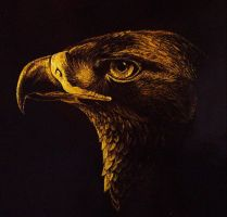 Golden Eagle Scratchboard by Skyelar