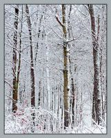 Snow forest. L1010381, with story by harrietsfriend
