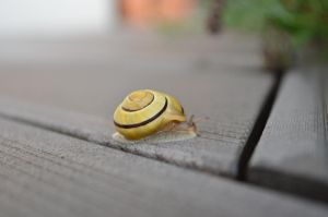 macro snail by AbsoluteNow