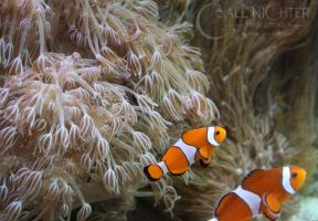 I Found Nemo by Armesan
