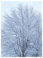 Trees and Snow by scottalynch