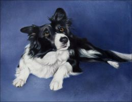 Border Collie Portrait by nikkiburr