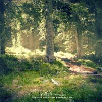 . . : : into the wild : : . . by phoenixgraphixstudio