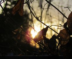 New Light, Through Old Leaves by LovingLivingLife