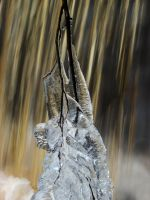 Mother Nature's Sculpture II by Photopathica