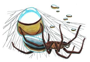 Diving-Bell Spider by NocturnalSea