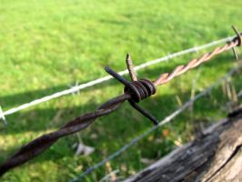 barbed wire by magnesart