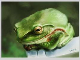Frog by Grainicus