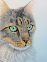 Cats eyes by graphiteimage