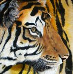 Eye of a Tiger by j0rosa
