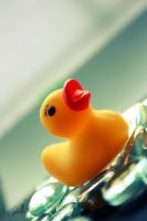 11-02-2012 - Duck by Golldfire