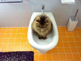 La toilette del gatto by BlackAnna