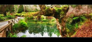 Wise Old Tree By the Lake by WiDoWm4k3r