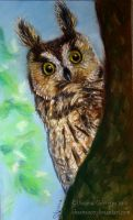 Long Eared Owl by Oksana007