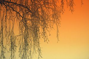Gradient by RobinHedberg