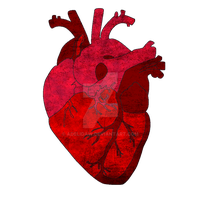 Human Heart. by Adelidaw