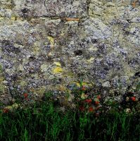 wall... by beans6677