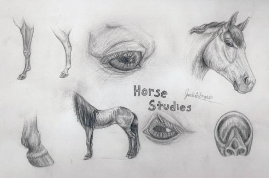 Horse Studies by x-Tuari-x