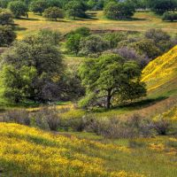 Trees with your Wildflowers by ernieleo
