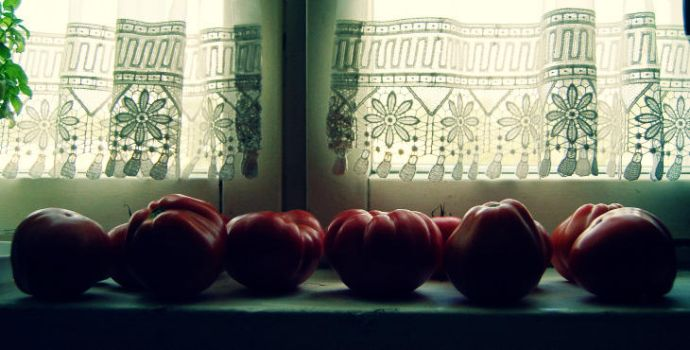 tomatoes. by anusz