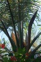 Palm Tree 2 by PeterTBexley