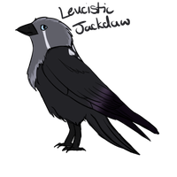 Leucistic Gradient Tipped Jackdaw[Adopt, closed] by GhostlyMyth