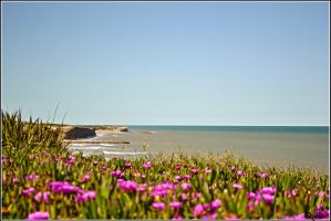 Beach and flowers by Ninaquilla