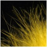 Yellow Feather 2 by YellowClub