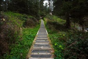 Forest Walkway Uphill Horizontal by leeorr-stock