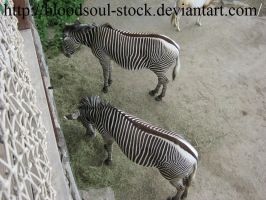 zebras from above 02 by Bloodsoul-Stock
