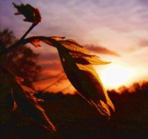 Another Leafy Sunset by Sanctusorium