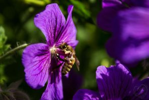 Bee-ing hungry by Heart-Luck