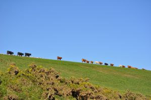 Till The Cows Come Home by rayrussell2000uk