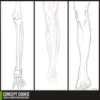 Anatomy Resource: Legs by CGCookie