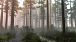 Pine Forest (morning)© by Massi-San