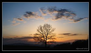 A tree at sunset by Rajmund67