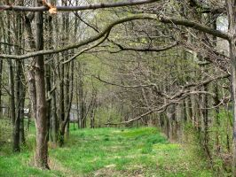 Path Stock 1 by GothicLolitaStock