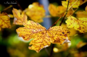 Autumn detail. by Phototubby