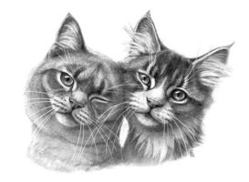 Cats in Love G134 by sschukina