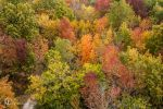 Fall Colors by gjkerkman