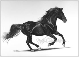 Black Stallion by NataliaRafinska