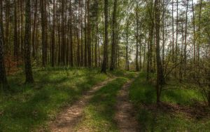 Forest path by Isyala