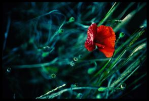 Poppies. II by Lilou1984