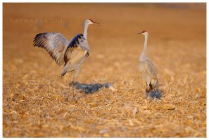 Dance of the Sandhill by Raymaker