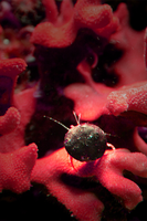 Lost among the coral red by nivek67