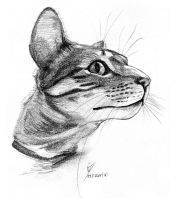 Lince by signedup